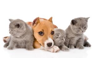 DEFU Tierfutter in demeter Qualität